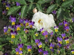 цветы, разные вместе, весна, 2018