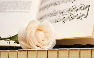 ноты, роза, цветок, клавиши