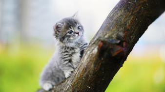 ветка, котенок, серый