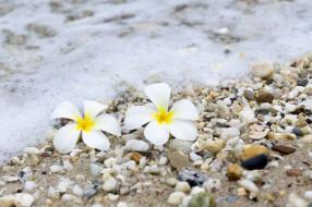 sea, plumeria, summer, плюмерия, wave, волны, море, камни, песок, галька, beach, цветы, пляж, sand, pebbles
