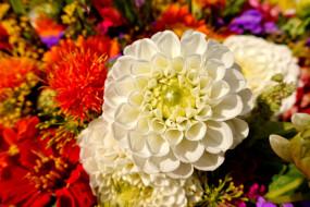 цветы, белый, Хризантемы, цветок