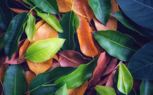 leaves, background, colorful, texture, листья, фон