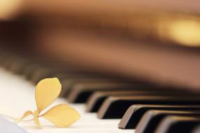 музыка, -музыкальные инструменты, цветок, клавиши