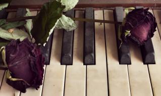 музыка, -музыкальные инструменты, клавиши, цветок