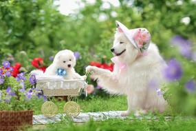 собаки, шляпка, щенок, коляска, цветы, семейный портрет, прогулка