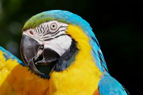 животные, попугаи, крылья, птица, ара, попугай