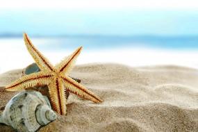 разное, ракушки,  кораллы,  декоративные и spa-камни, морская, звезда, раковина, песок