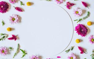 хризантемы, фон, розовые, pink, flowers, цветы