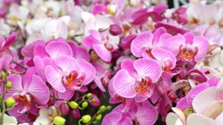 цветы, орхидеи, flowering, orchids, цветение, flowers