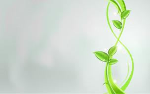 праздничные, международный женский день - 8 марта, растения