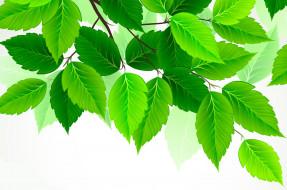 листья, зеленый, береза