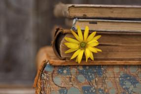 книги, цветок, фон