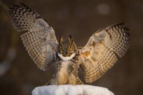 животные, совы, сова, птица, филин, фон, снег, крылья