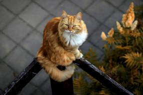 животные, коты, фон, взгляд, кошка