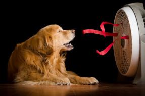 животные, собаки, дом, вентилятор, собака
