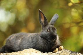 природа, заяц, животное