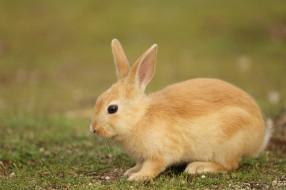 заяц, животное, природа