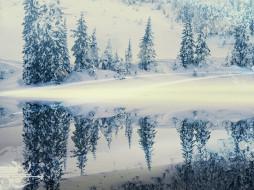 снег, отражение, зима, деревья, лес