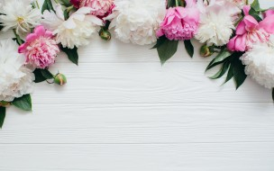 бутоны, flowers, wood, white, белые, peonies, цветы, розовые, пионы, pink