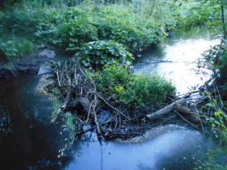 природа, деревья, лес, вода