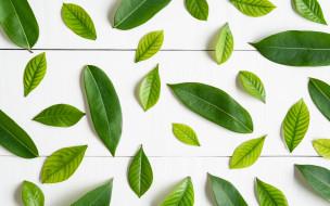 фон, листья, green, зеленые, wood, background, leaves