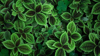 листья, зелень, фон, боке