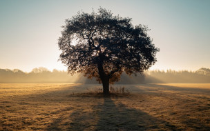 утро, дерево, поле