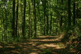 Тропа, Деревья, Path, Лес, Trees, Forest