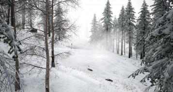 лес, снег, дорога
