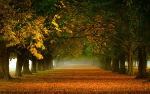 аллея, осень, деревья, листопад