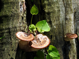 ствол, грибы, деревья