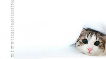 кошка, взгляд, морда