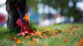 музыка, -музыкальные инструменты, скрипка, листья, природа, растения, дерево