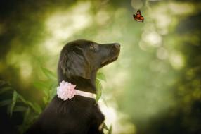 животные, собаки, природа, животное, бабочка, собака, профиль, пёс, боке