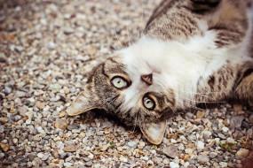 животные, коты, кот, кошка, щебень