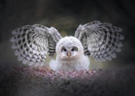 животные, совы, глаза, взгляд, листья, природа, серый, фон, сова, птица, портрет, крылья, пух, красотка, птенец, взмах, боке, оперение, размах, пестрая