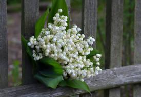 букет, лесные цветы, ландыши, красота