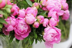 цветы, букет, бутоны, пионы