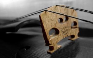 музыка, -музыкальные инструменты, дека, скрипка