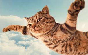 юмор и приколы, кот, полосатый, небо, полет