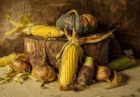 pumpkin, corn, still life, натюрморт, овощи, тыква, урожай, кукуруза, autumn, harvest, vegetables
