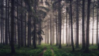 дорога, лес, туман