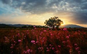 луг, дерево, трава, цветы, тучи, небо