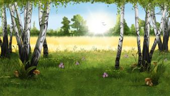 грибы, солнце, берёзы, поле, лето