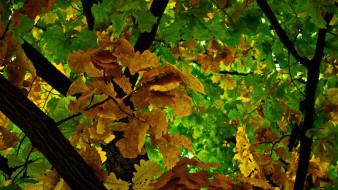 осень, дерево, дуб