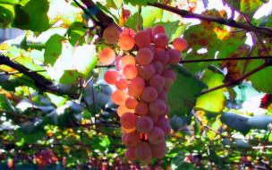 гроздья