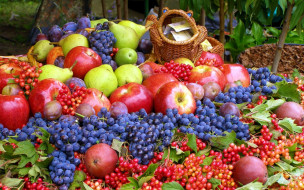виноград, яблоки, груши
