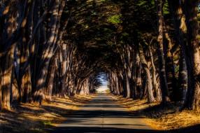 природа, дороги, деревья, дорога, шоссе