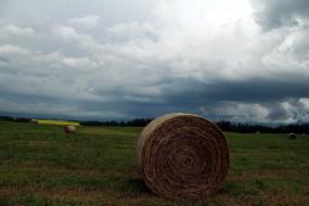 природа, поля, поле, облака