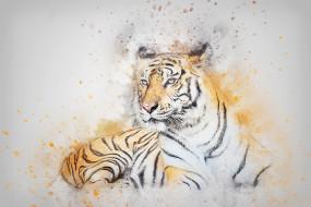 рисованное, животные,  тигры, тигр